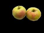 りんご(名月)